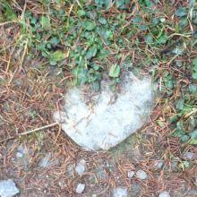 Hart in de natuur