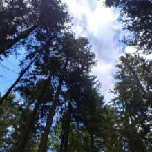 Bos op de Hochheide